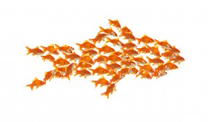 business teamwork concept with goldfishes together